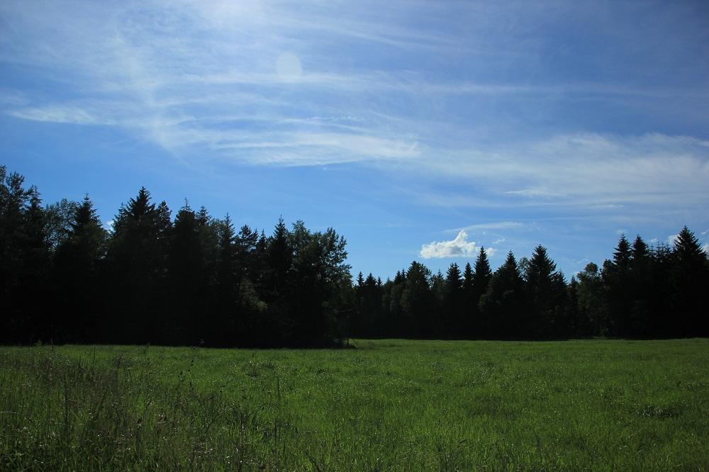 Riedwiese Steinacher Ried