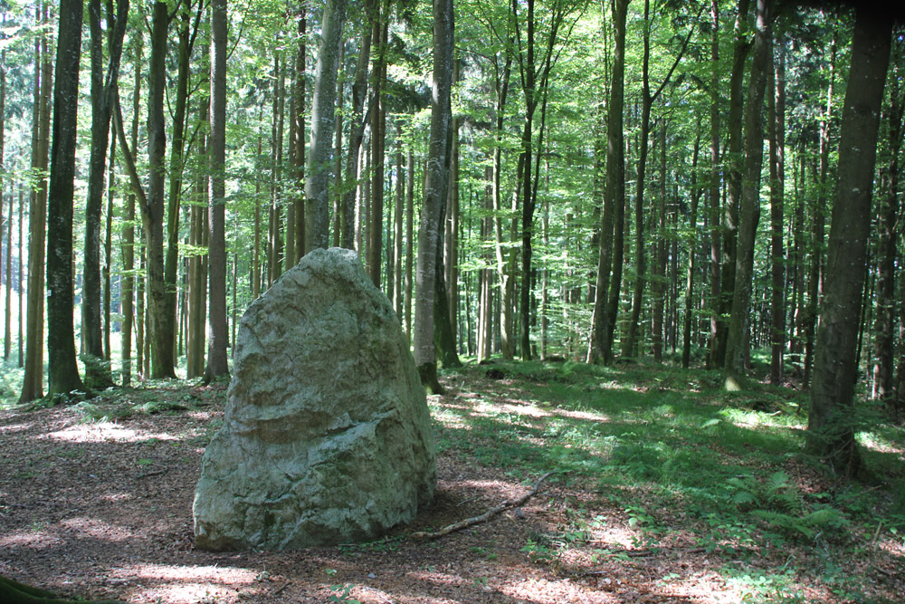 Findling-am-Waldlehrpfad-Tannenbühl-Bad-Waldsee