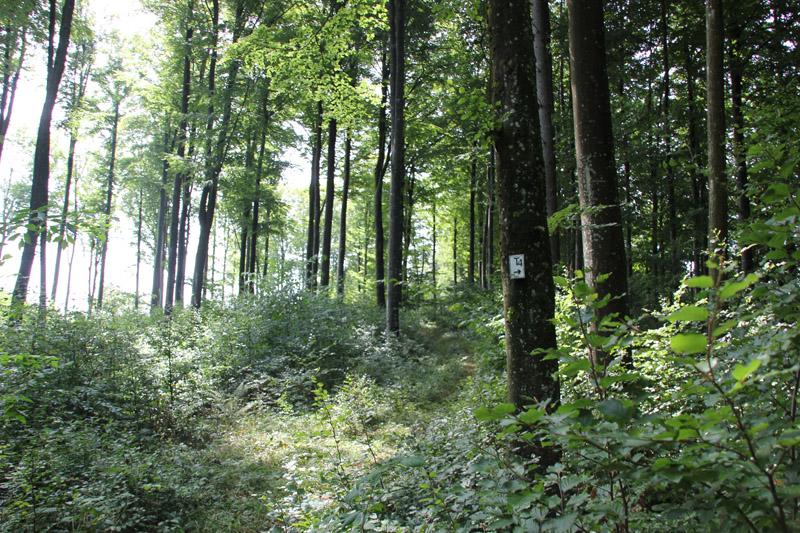 Wanderweg durch Wald Alttann Wolfegg