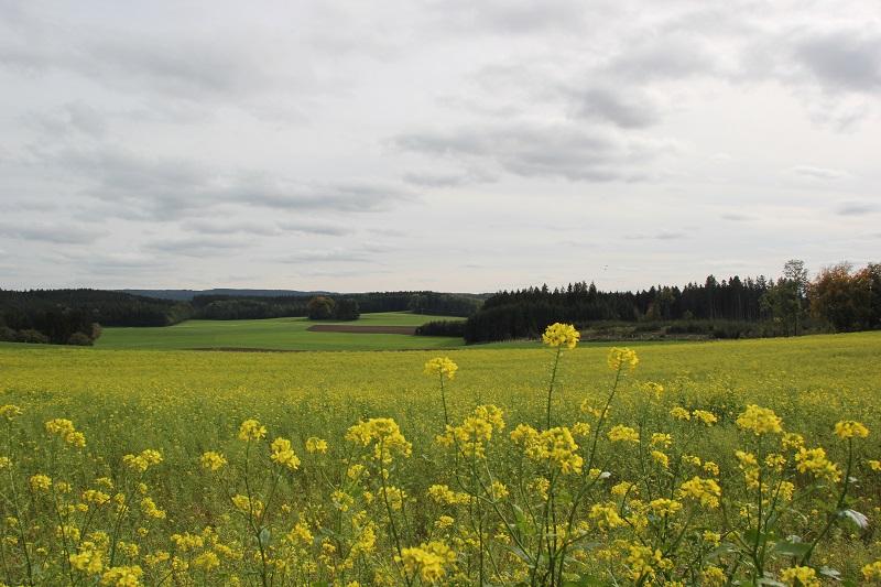 Landschaft Oberschwaben